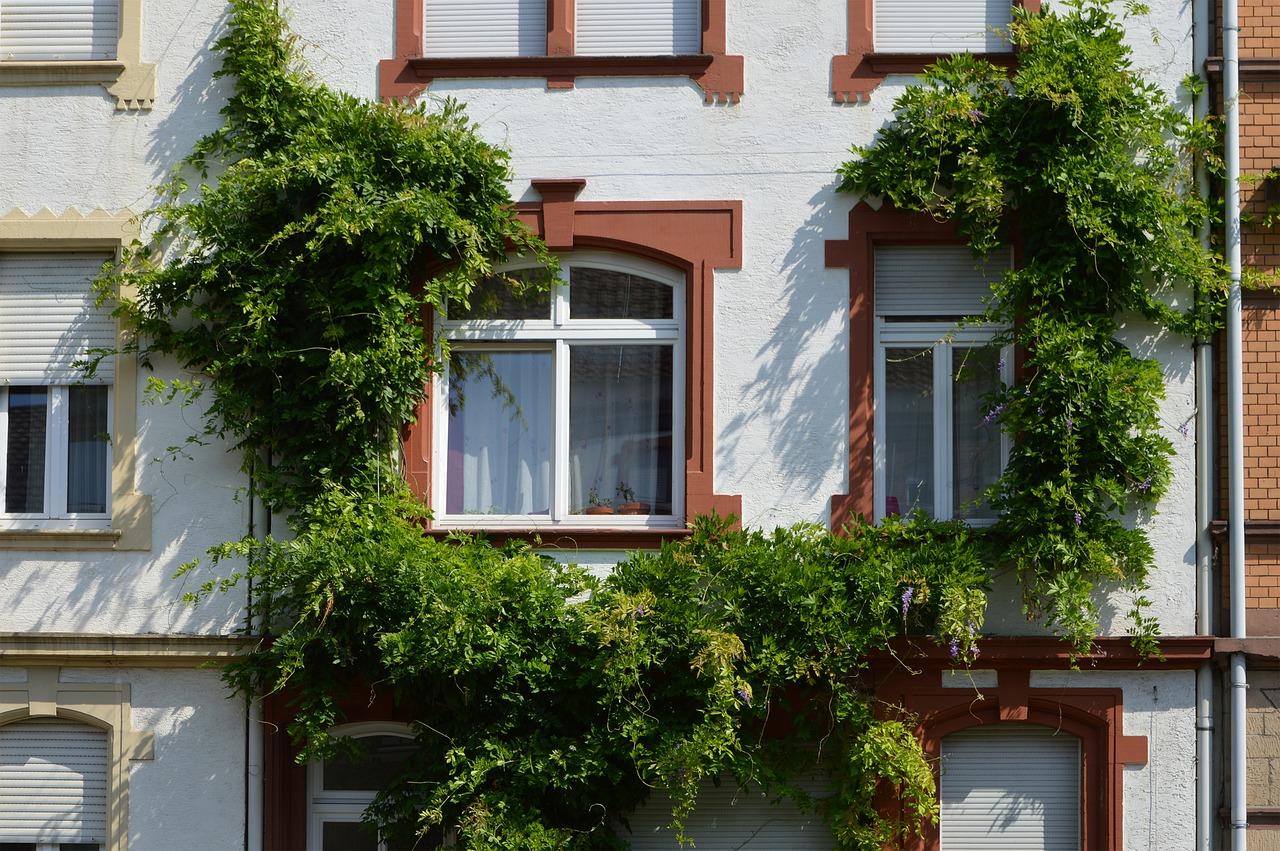 Quand faut-il repeindre une fenêtre en bois ?